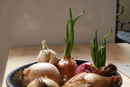 Onion sprouts!