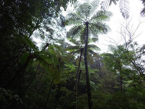 japan forest amami 奄美大島 kasgoshima
