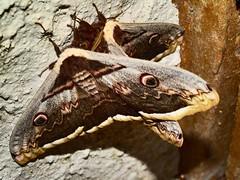 Papillons matinal
