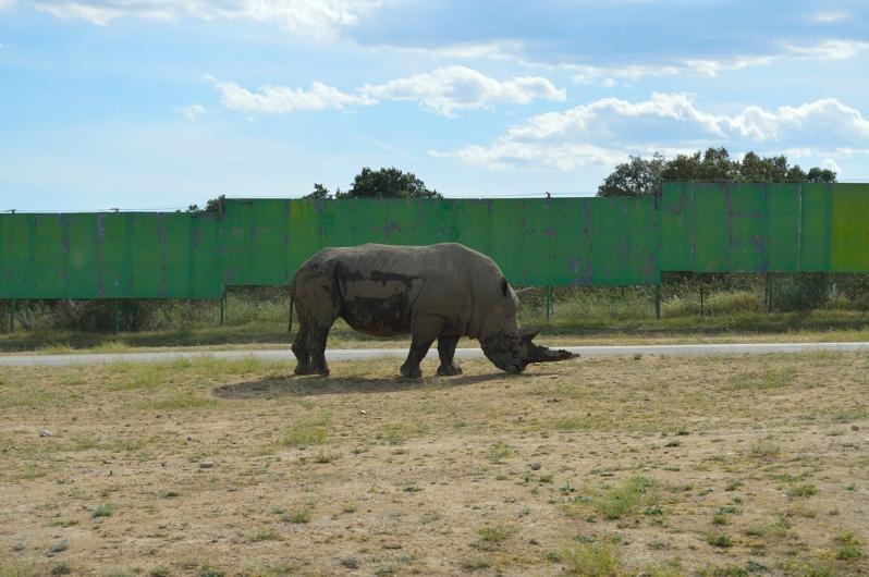 lara-vazquez-madlula-blog-safari-rino