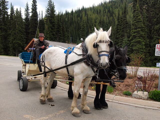 Carriage ride in Sun Peaks, British Columbia
