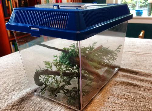 Mister Stripey's terrarium