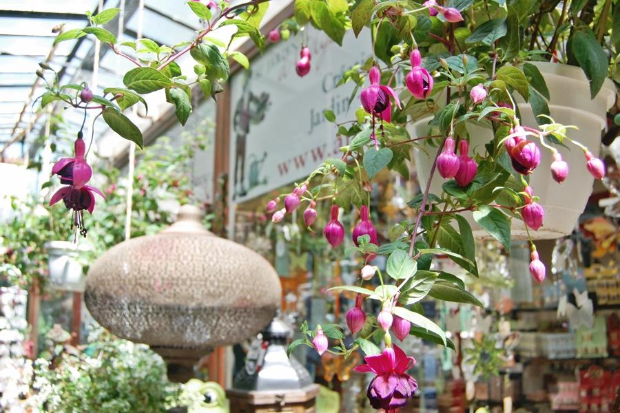 Marché aux fleurs (4)