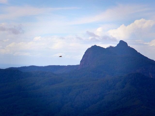 Eagles over Mt Warning
