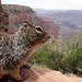 Grand Canyon Dude