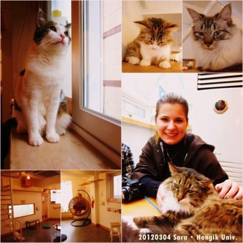 Cats Living1