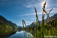 Grasses at Lake Weitsee - expl..4
