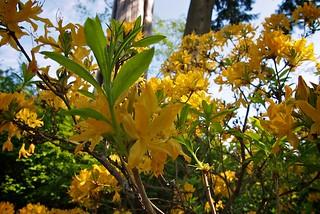 Stanley Park Flowers