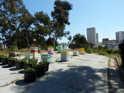Bees at Hayes Valley Farm