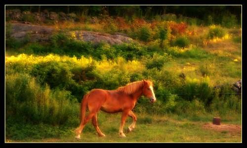 horse pet nature animal pretty