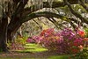 Charleston Plantation Explodes with Spring Color by Mark VanDyke Photography