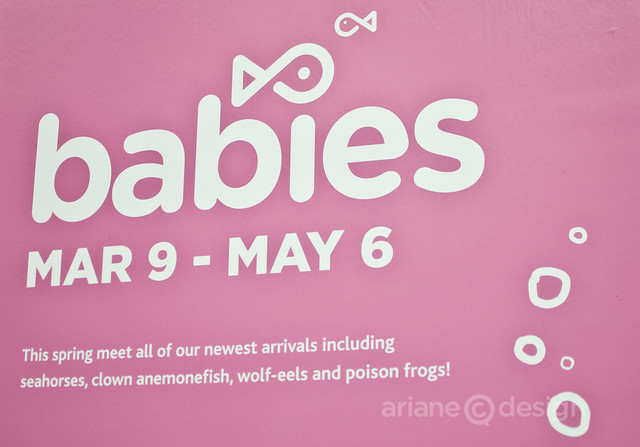 Vancouver Aquarium Babies