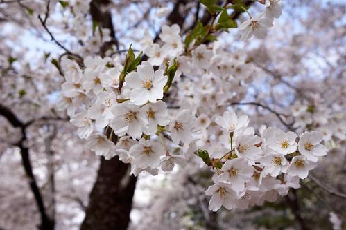 AKG_2012-04-19_007