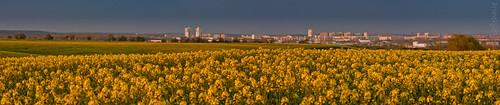 Panorama von Halle/Saale - Halle-Neustadt