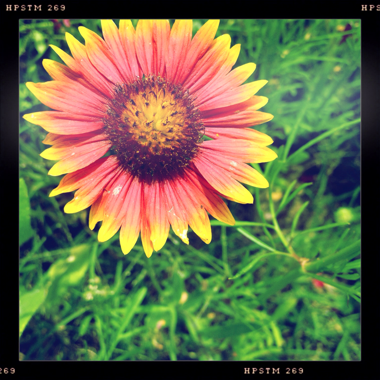 Hipsta-Wildflowers01