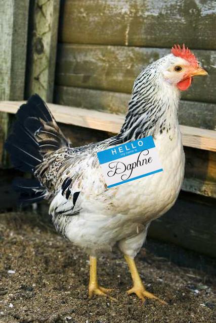 Chicken Daphne