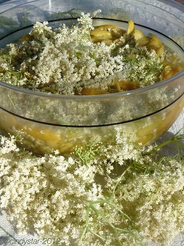 facendo sciroppo di sambuco-making elder syrup