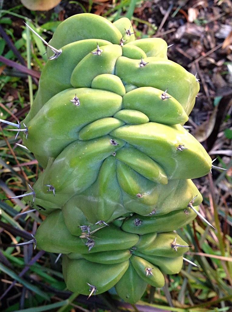Random Cacti Photo Thread - Page 2 14304800776_577f3d92ae_b