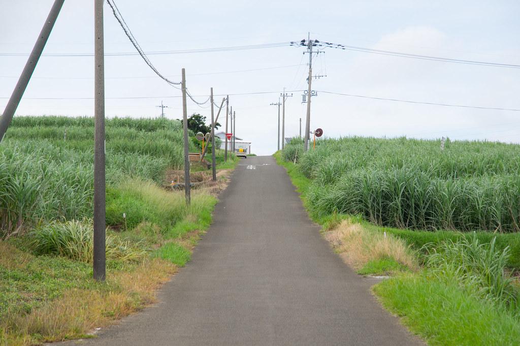花苗の通学路