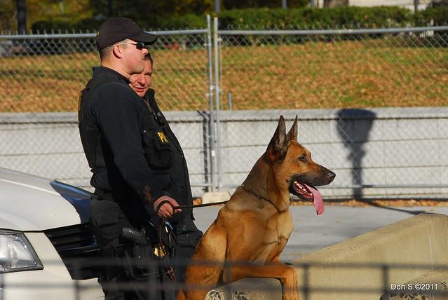 Security dog, White House