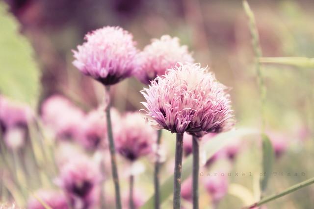 Flores de Monte!