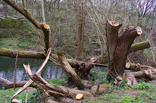 Lose wood