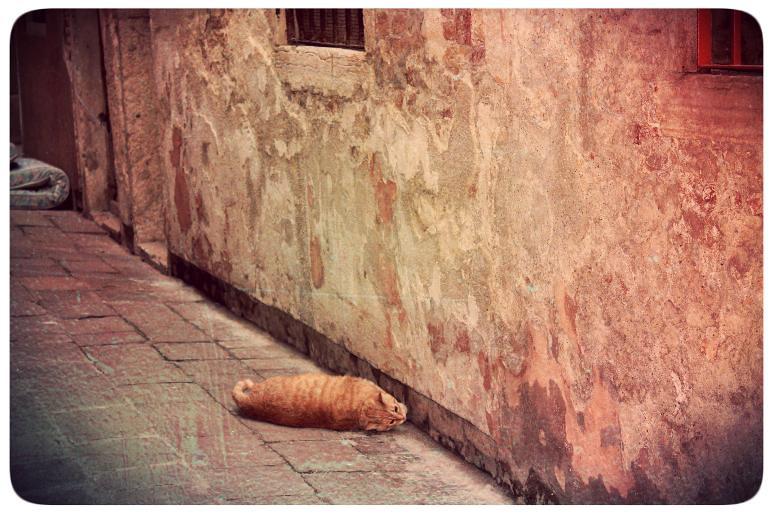 Venice day 3 cat