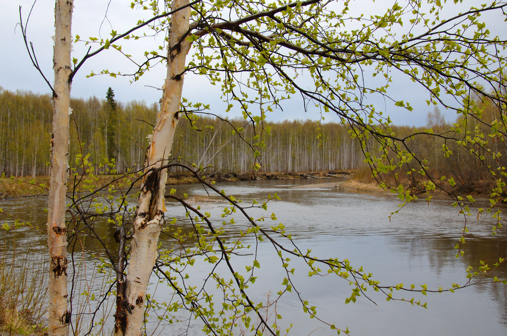 Green on the Chena