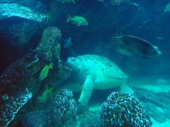 Sea Turtle, New England Aquarium
