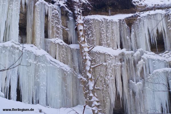Winter in der Pähler Schlucht