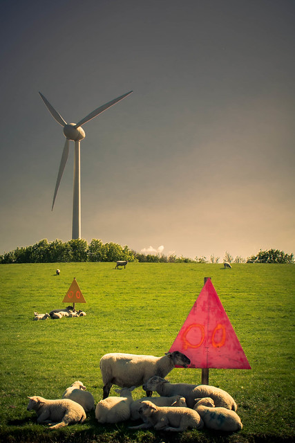 Sheep and Wind Turbine