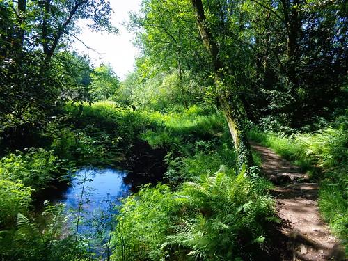 Paisaxe río Sarela