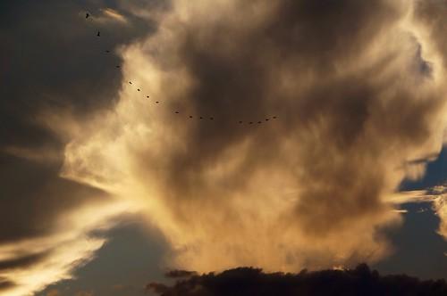 sky birds clouds motionshot motionshotapp posslowresfail
