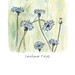 Comforting Cornflower Fields Illustration