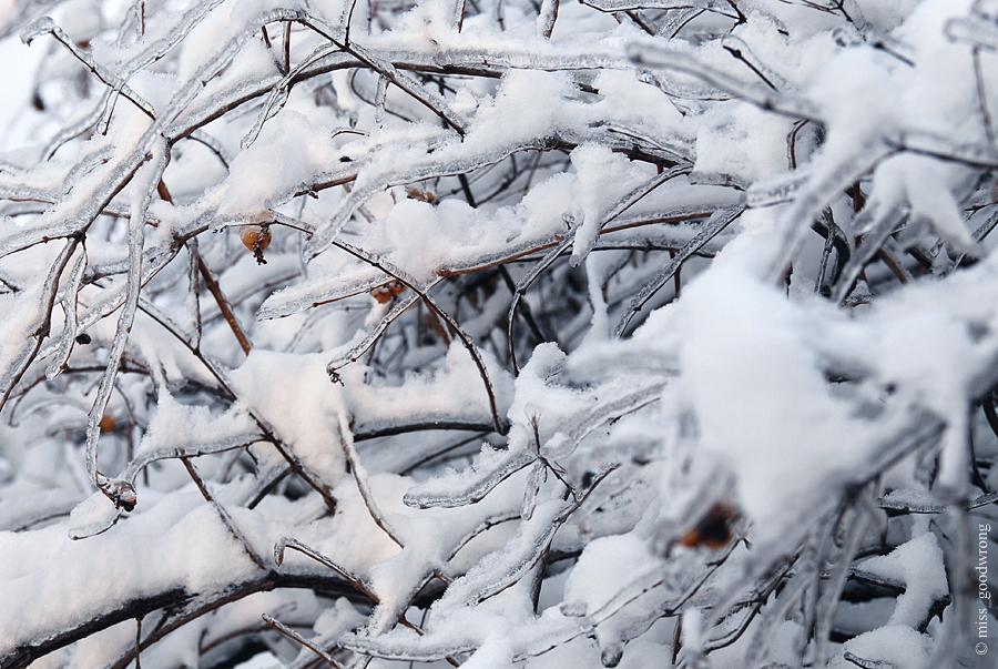 Winter 25