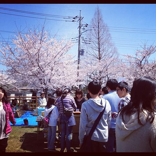 郷町会の花見です。