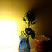 couve flor! by inês milagres