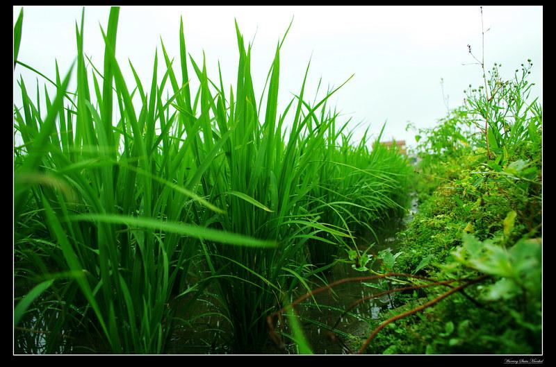 賓綠真的一級棒~~好讚~~~