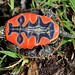 Why They Are Called Painted Turtles