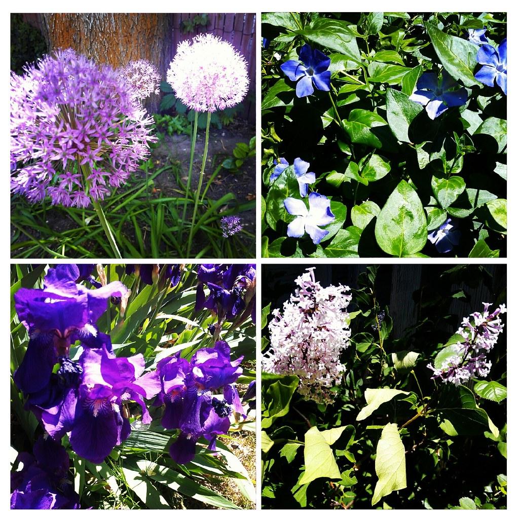 come a lily, come a lilac