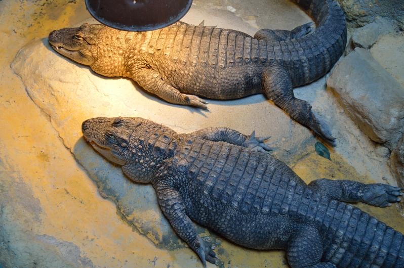 lara-vazquez-madlula-blog-safari-mad-crocodriles