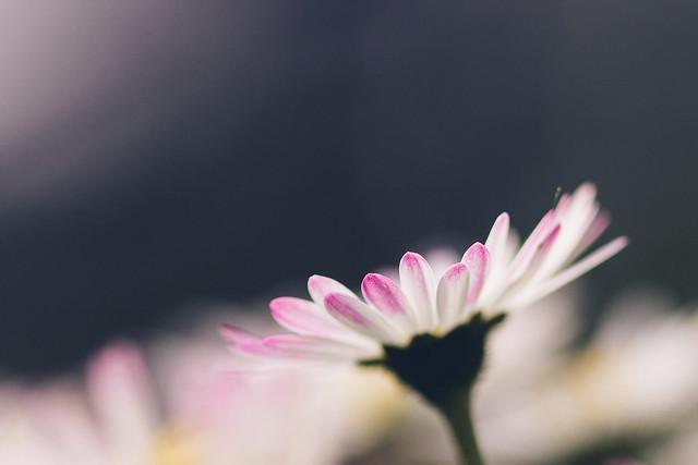 [040] Daisy