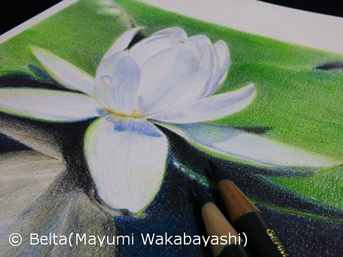 2014_06_06_waterlily_01_s