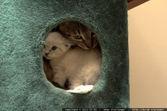 babykitty invites snowball into the treehouse