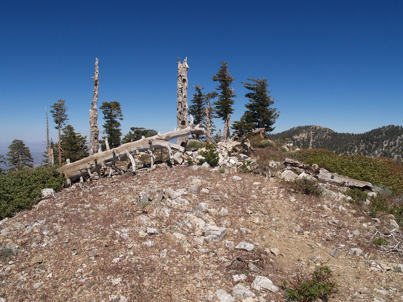 Bighorn Peak Summit. That white object just right of center is the summit register can