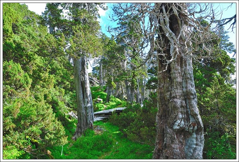 1雪北山屋樹林
