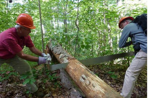 Wild South Helping Hands volunteers work together to remove fallen trees from the Bankhead National Forest.