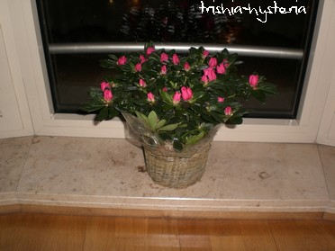 fleurspasen