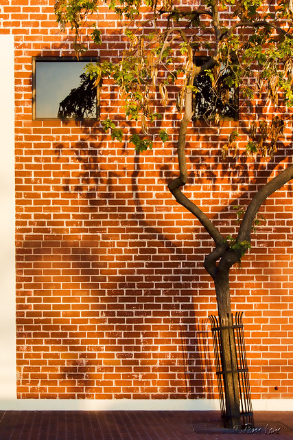 Tree against brick wall