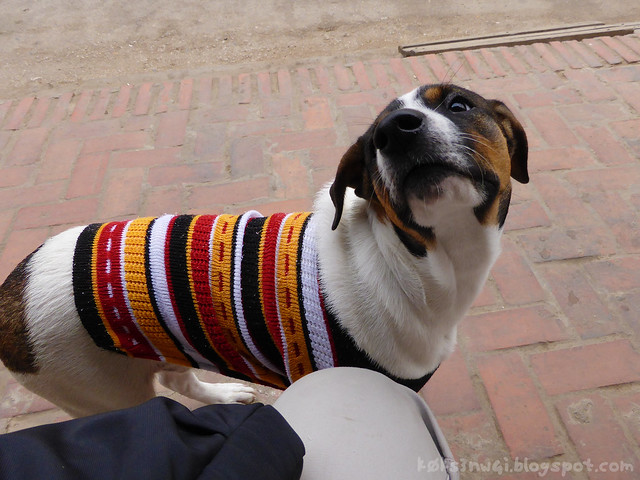 Luang Prabang Dog in Sweater
